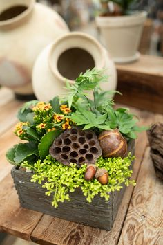 A forest collection for your Autumn home! This faux wood planter is full of tropicals, fall coloured blooms and woodland moss. Accented with acorns and. Indoor Ferns, Indoor Tropical Plants, Tropical Garden, Fall Planters, Wood Planters, Natural Interior, Natural Home Decor, House Plants Decor, Plant Decor
