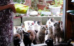 Cats on Tashirojima