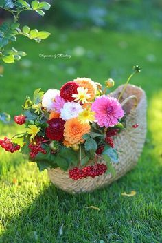 Good Afternoon sister and all,enjoy your time xxx❤❤❤💌 Good Morning Images Flowers, Good Morning Beautiful Images, Good Morning Photos, Flower Girl Pictures, Art Pictures, Good Morning Greetings, Flower Doodles, Arte Floral, Flower Farm