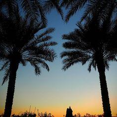 Palm Jumeirah sunset silhouette  #sunsetphotography #olympusomdem5markii #travelshots #dubai #palmtrees #gradientsky Palm Jumeirah, Sunset Silhouette, Sunset Photography, Business Travel, Palm Trees, Dubai, Shots, Sky, Celestial