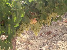 Junio...uvas