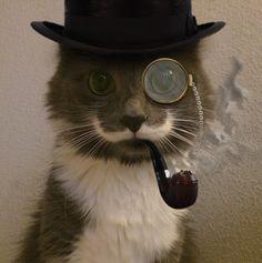 Resultado de imagen para imagen gato fumando