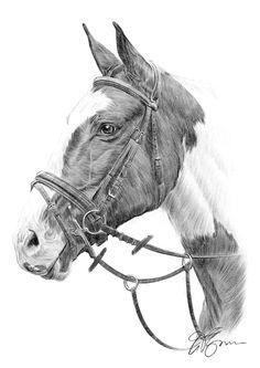 Brown Horse pencil drawing thumbnail