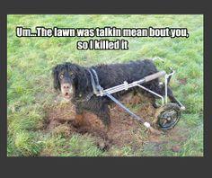 Dog Wheelchair by Eddie's Wheels