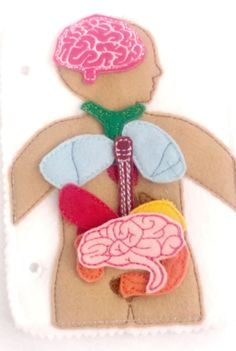 Anatomy page comes with page embroidered with organs plus 10 additional felt organs that can be arranged over and over. Pieces are small please supervise children that are still putting things in thei