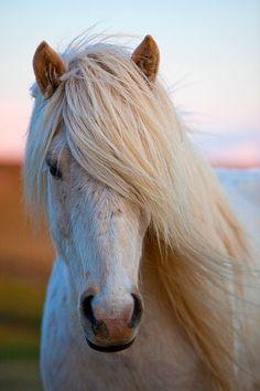 Weißes Pony