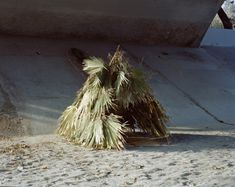 """greensacredlode: """" The Palms, Something in the Way 2011 Interactive installation palm hut constructed from bamboo and palm fronds from wild Los Angeles River California Fan Palm fronds. Guests were invited to browse Rolling Stone magazines from..."""