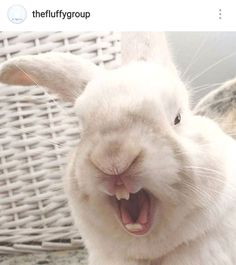 The rabbit from Monty Python and the Holy Grail? Funny Rabbit, Pet Rabbit, Funny Bunnies, Cute Bunny, Rabbit Toys, Cute Baby Animals, Animals And Pets, Funny Animals, Funny Animal Pictures