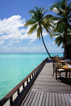 Reethi Rah, Maldives #PalmTree