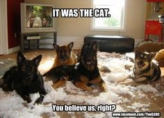 LOL - blame EVERYTHING on the cat....lol  Mostly it's true.  :-)