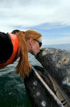 An extremely lucky tourist had a very up close and personal encounter with a gray whale in Mexico. The gray whale - and its curious calf - stunned their guests by drifting in for hugs and kisses. Beautiful Creatures, Animals Beautiful, Cute Animals, Orcas, Rettet Die Wale, Save The Whales, Gray Whale, Marine Biology, Ocean Creatures