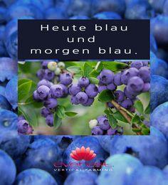 EVEREST - Heute blau und morgen blau.