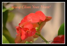 Spring clean your heart part II. A great devotional that focuses on the most important part of spring cleaning.