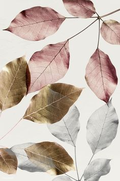 Silver leaves with gold and pink leaves pattern background | premium image by rawpixel.com / HwangMangjoo