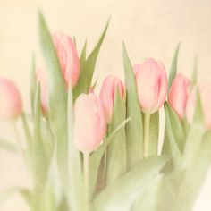 Spring photo pink tulips spring decor gift for her by bomobob, $20.00