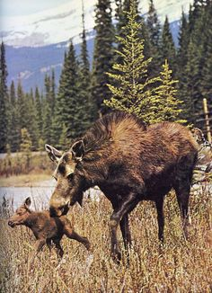 How sweet is this. Baby's first steps most likely. Nature is such a beautiful thing. The blonde in the pic.