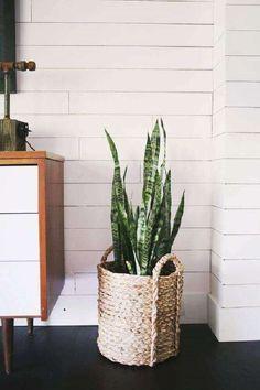 vasos decorativos para plantas tipo cesto