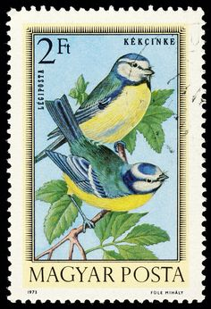 https://flic.kr/p/791BHS   stamp hungary 1973 Blaumeise Cyanistes caeruleus