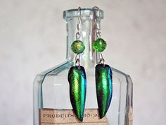 Hey, I found this really awesome Etsy listing at https://www.etsy.com/listing/168222493/boucles-doreille-coleoptere-taxidermie