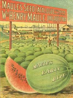 Love the look of these vintage seed catalogs - Maule Seed Co #diycrafts #ecrafty #seedcatalogs