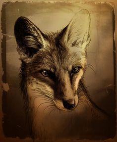 Fuchs by Culpeo-Fox.deviantart.com on @deviantART