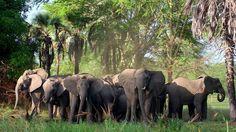 Gorongosa, génesis de la vida salvaje. Descubre este Parque Nacional de Mozambique.