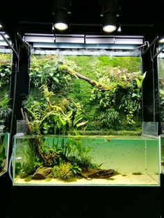 nature aquarium,Takashi Amano 天野尚