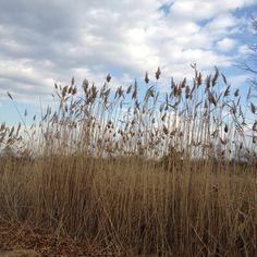 Wantagh Park, Long Island, NY - November 2011.