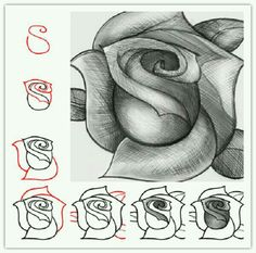 This is the diagram I used for my rose drawing. I did mine in graphite but it can also be done in pastels