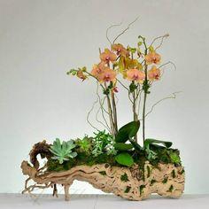 Orchids Garden, Orchid Plants, Air Plants, Indoor Plants, Orchid Flower Arrangements, Succulent Arrangements, Planting Succulents, Rare Orchids, Phalaenopsis Orchid