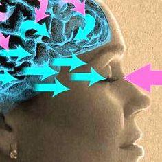 Quelle est l'avancée récente la plus intéressante en neurosciences ?
