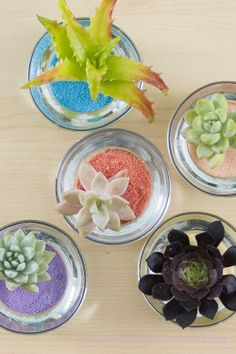 Wedding Succulent Centerpieces - Fun Easy and Inexpensive - Succulents and Sunshine