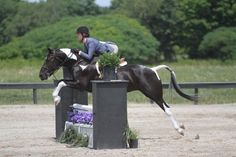 "jumpthestars: "" Panda - a 14.2 pony hunter. Beautiful jumper! (ad is here) """
