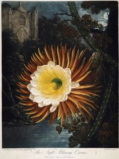 Peter Charles Henderson - Google Search