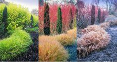 Пример идеального сочетания четырех компонентов сада, позволяющих все сезоны поддерживать его декоративность. В саду Адриана Блума (Adrian Bloom) это сочетание  кустарника дерена белого «Aurea» (Cornus alba «Aurea»), тисса ягодного Робуста (Taxus baccata Robusta), травы хаконехлои большой (Hakonechloa macra)  и многолетника офиопогона плоскострелого Нигресценс (Ophiopogon planiscapus Nigrescens).