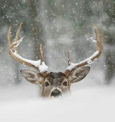 Hiding in the snow