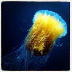 .@Göran Forsberg | #ocean #wildlifephotography #uw #underwater_world #tagstagram