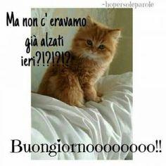 Buongiorno Teneri Good Morning Sister, Good Morning Sunshine, Good Morning Good Night, Day For Night, Italian Memes, Cat Art, Funny Images, Neko, Animals And Pets