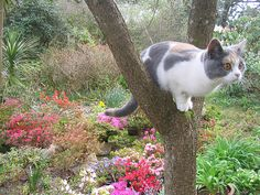 Perched... Cat up a tree! by Squeaky Knees, via Flickr