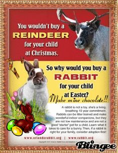 You wouldn't buy a Reindeer for Christmas, so why would you buy a Rabbit for Easter? - Make mine chocolate campaign