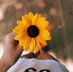 Image uploaded by Pamela Lindsey. Find images and videos about flowers, yellow and sunflower on We Heart It - the app to get lost in what you love.