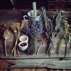 aesthetic, witchcraft, and wicca image - something with herbs perhaps? Hedge Witch, Witch Aesthetic, Practical Magic, Kitchen Witch, Book Of Shadows, Potpourri, Herbalism, Illustrations, Witches