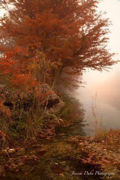 Foggy Sunrise, Sunrise Photography, Landscape Photography, Texas Hill Country, Cypress Tree, River Photography, Fall Colors, Fine Art Photo by JessDukePhotography on Etsy