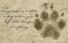 Every once in a while a dog enters your life and changes everything. <3