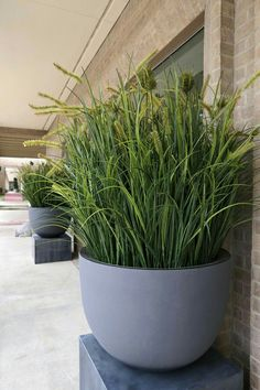 Plants on the terrace potted garden grasses plantations plants for protection garden pots plants that create privacy Balcony Plants, Garden Planters, Indoor Plants, Potted Garden, Outdoor Pots, Outdoor Gardens, Design Jardin, Garden Design, Seaside Garden