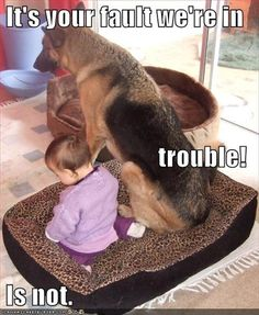 dog is in trouble.. This would be Zoe , diesel and our child.