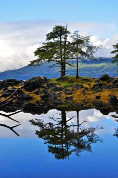 knarled by exposure Charlotte City, Haida Gwaii, Archipelago, Archie, British Columbia, Illusions, Islands, Reflection, Places To Visit