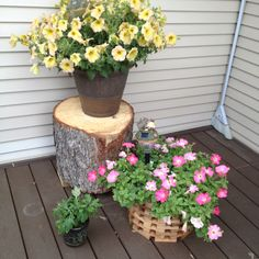 Great backyard idea: 1) take old tree stumps to use as decorative elevation for flower pots. 2) Not enough seats? Use them as stools for guests. Rustic and beautiful.