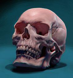 Skull Study, Rafael Benjamin on ArtStation at https://www.artstation.com/artwork/aLXkX