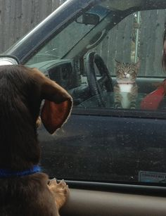 "Look at This Cat of the Day: ""And So We Meet Again"""